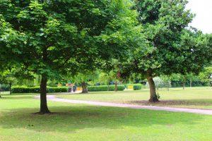 Cale Green Park Lawn
